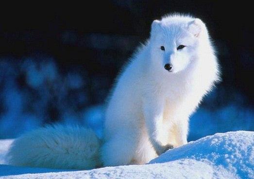 Самые красивые животные мира. Самые красивые животные мира 6