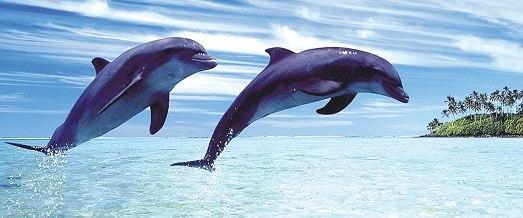 Самые красивые животные мира. Самые красивые животные мира 7