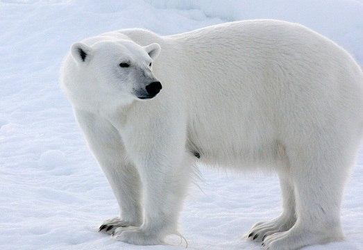 Самые красивые животные мира. Самые красивые животные мира 9