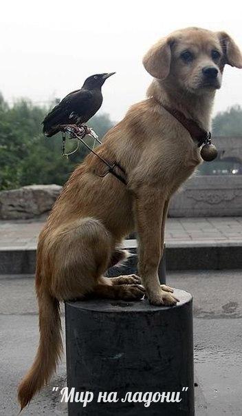 Дружба, которой не может быть: самые маловероятные приятели в мире фауны. Дружба, которой не может быть 1