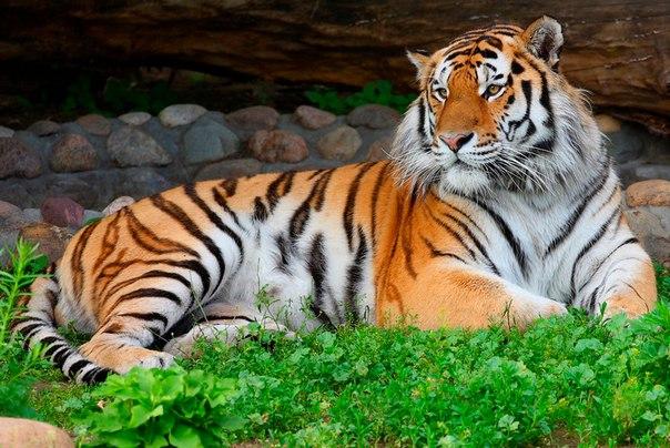 Животные под угрозой исчезновения. Животные под угрозой 8