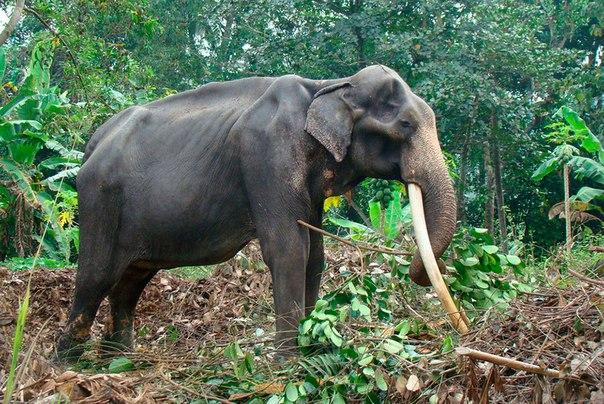 Животные под угрозой исчезновения. Животные под угрозой 9