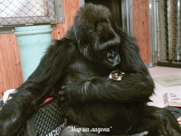 Дружба, которой не может быть: самые маловероятные приятели в мире фауны. Дружба, которой не может быть 8