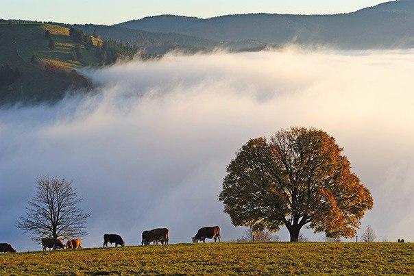 Осень не за горами. Осень не за горами 2