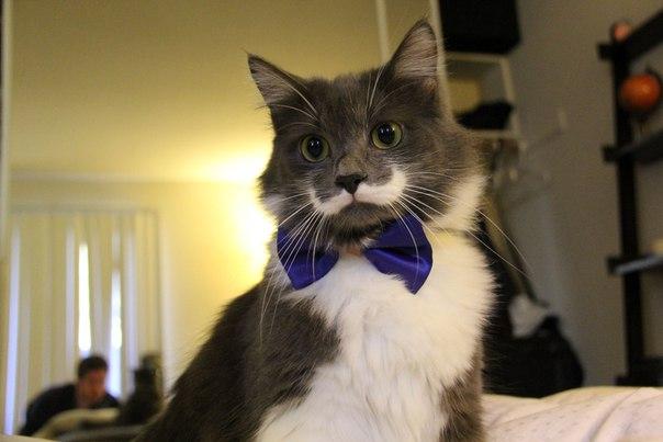 Самые популярные коты мира. Самые популярные коты мира 4