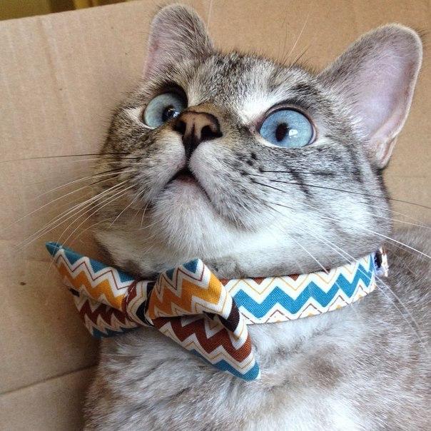 Самые популярные коты мира. Самые популярные коты мира 5