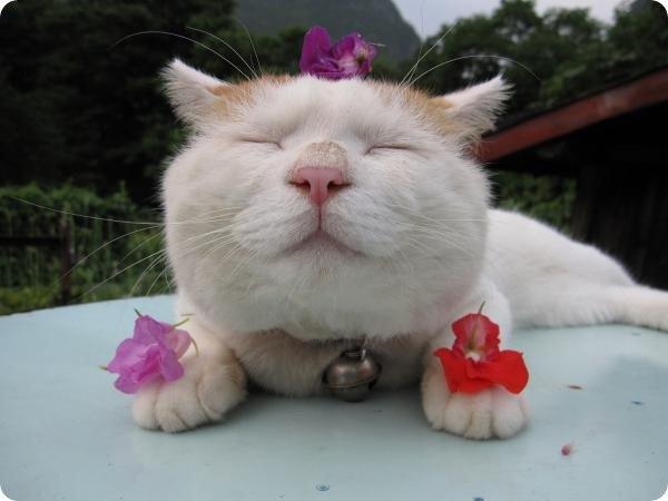 Самые популярные коты мира. Самые популярные коты мира 6