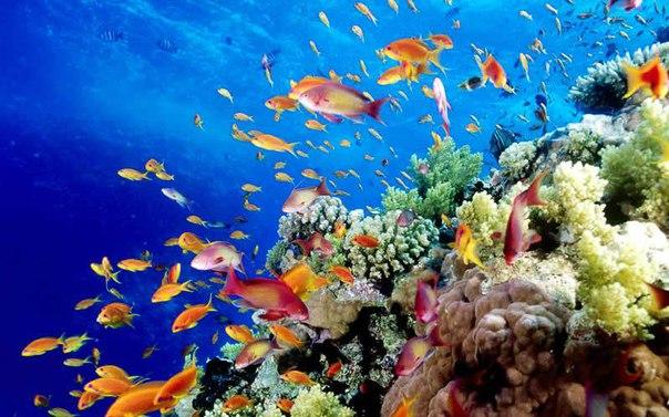 10 красивейших национальных парков мира. 10 красивейших национальных 1