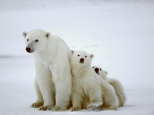 Наблюдение за дикой природой: Топ-9 мест. Наблюдение за дикой природой 3