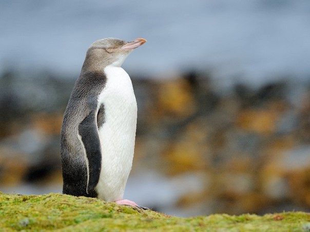 Наблюдение за дикой природой: Топ-9 мест. Наблюдение за дикой природой 7
