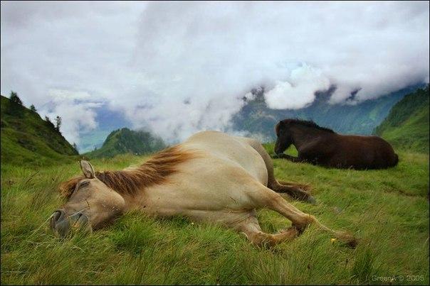 Как спят лошади. Как спят лошади 1