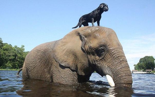 Слон и пес, которых подружила вода. Слон и пес, которых подружила 1
