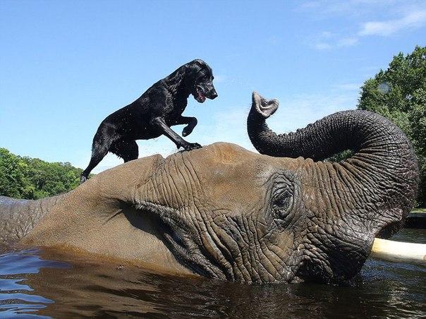 Слон и пес, которых подружила вода. Слон и пес, которых подружила 2