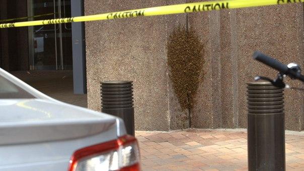 Небоскреб в Нью-Йорке закрыли из-за того, что 20 тысяч пчел устроили в нем улей. Небоскреб в Нью-Йорке закрыли 2
