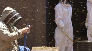 Небоскреб в Нью-Йорке закрыли из-за того, что 20 тысяч пчел устроили в нем улей
