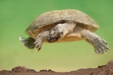 Разговорчивые черепахи
